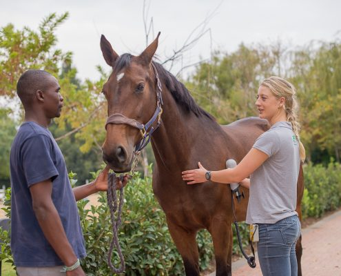 equine physiotherapy